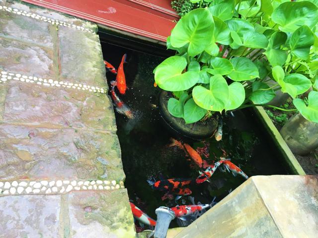 【画像】Golden Butterfly Villa エントランスの池