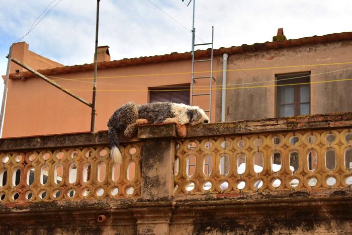 【画像】コロニア・グエルの街並み⑤ 犬1