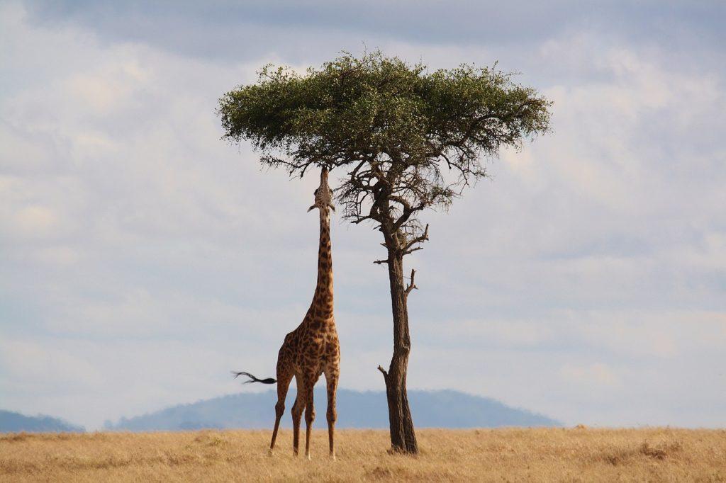 アフリカや南米に渡航の際は、入国時にイエローカードの提示が求められる